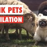 Prank Pets | Funny Pet Video Compilation 2017