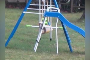 Squirrel-Makes-It-Up-The-Slide