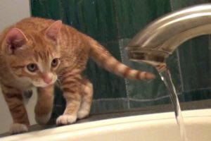 7-Signs-That-Cats-Are-Scientists