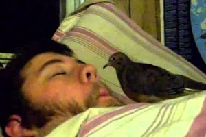 Bird-Eats-Out-of-Sleeping-Mans-Nose