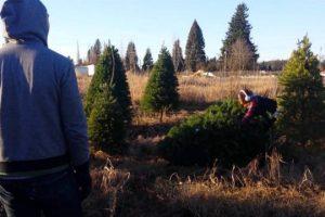 Christmas-Tree-Fail