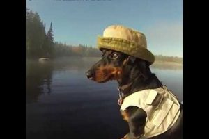 Crusoe-The-Dog-Who-Loves-Fishing