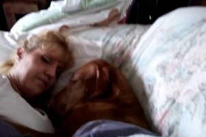Dog-Pillow-Talk