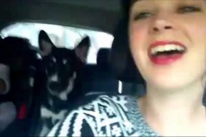 Dog-Sings-Along-on-Family-Road-Trip