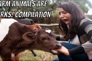 Farm-Animals-are-Jerks