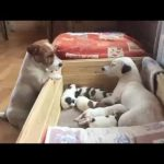 Funny Jack Russell Terrier 2017 #4