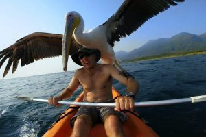GoPro-Pelican-Learns-To-Fish