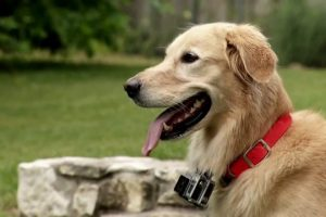 Huck-the-Roof-Dog-is-a-social-media-sensation