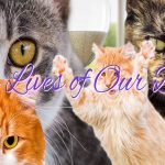 Nine Lives of Our Days | Cat Soap Opera