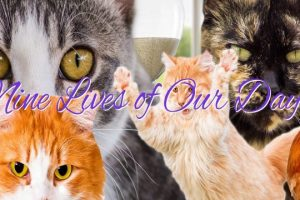 Nine-Lives-of-Our-Days-Cat-Soap-Opera