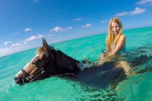 Swimming-Horses-of-Grand-Cayman