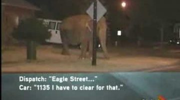 a-911-call-about-an-elephant
