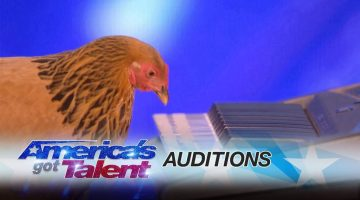 Chicken Plays America the Beautiful on Piano