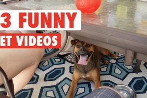 13-Funny-Pets-Awesome-Pet-Video-Compilation-2017