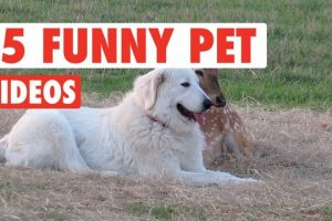 15-Funny-Pets-Awesome-Pet-Video-Compilation-2017