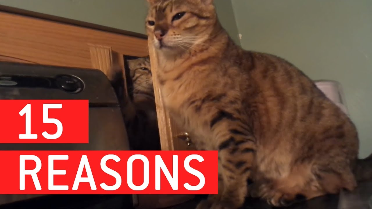 15 Reasons Why Cats Are The Worst 1funny Com