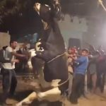 2 Bulls Trapped In 50-Feet Well Rescued