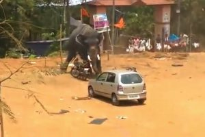 Angry-Elephant-Topples-Car