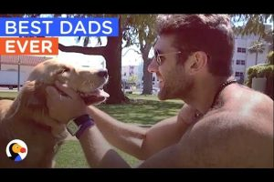 BEST-Animal-Dads-of-ALL-TIME-Fathers-Day-Compilation-The-Dodo-Daily