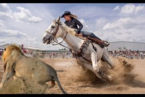 Best-Trained-Disciplined-Horses