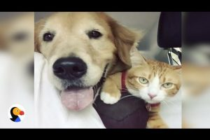 Dog-Adopts-Feral-Kitten-and-Become-BEST-Friends-The-Dodo