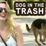Dog Hops In GARBAGE Truck Prank!
