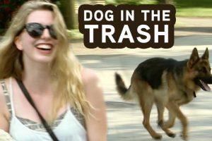 Dog-Hops-In-GARBAGE-Truck-Prank