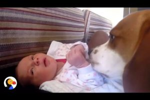 Dog-Meets-Baby-Sister-Has-THE-BEST-Reaction-The-Dodo