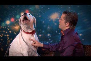 Dog-sings-Whitney-Houston-Belgiums-Got-Talent-VTM