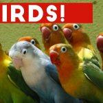 Funniest Bird Videos Weekly Compilation 2017