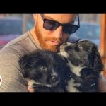 Guy Finds Puppies on Desert Road Trip UPDATE | The Dodo