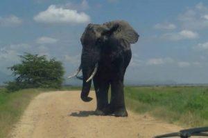 MONSTER-ELEPHANT-ENCOUNTER