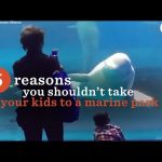 Marine Parks: Why You Should Skip A Visit To Marine Parks | The Dodo
