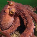 Clever Octopus Steals a Fisherman's Catch