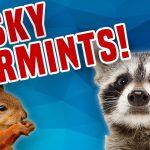 Pesky Varmints! | Critter and Wild Animal Compilation