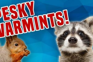 Pesky-Varmints-Critter-and-Wild-Animal-Compilation