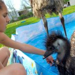 Playful Emus Make The Perfect Family Pets: CUTE AS FLUFF