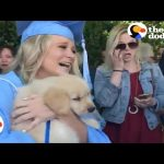 Puppy Surprise: Girl at Graduation Surprised with Puppy