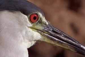 Smart-Heron-Used-Bread-To-Fish-Super-Smart-Animals-BBC-Earth
