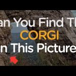 Spot the Corgi: Can You Find The Corgi Hidden In These Pictures? | The Dodo