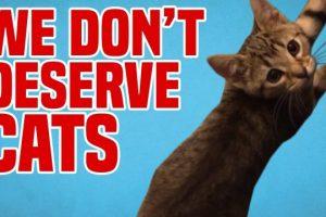 We-Dont-Deserve-Cats-Funny-Cat-Fails