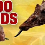 Zoo Kids | Funny Kids and Animals Compilation