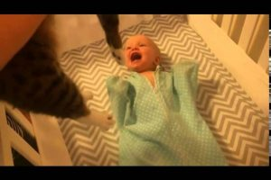 Baby-Cant-Contain-Her-Excitement-When-She-Sees-a-Cat