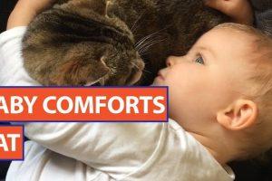 Baby-Comforts-Kitten-Video-Daily-Heart-Beat-2017