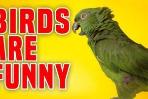 Birds-Are-Funny-Funniest-Bird-Compilation