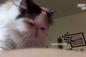 Cat-Gives-Massage-Video-2017-Daily-Heart-Beat