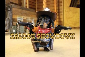 Crusoe-the-Cowboy-Dachshund-Saloon-Showdown