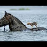 Animals Rescuing Other Animals