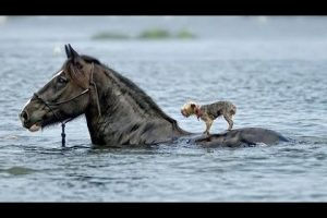 Emotional-and-Amazing-Animals-Rescuing-Other-Animals-HD