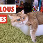 Fabulous Felines   Funny Cat Video Compilation 2017